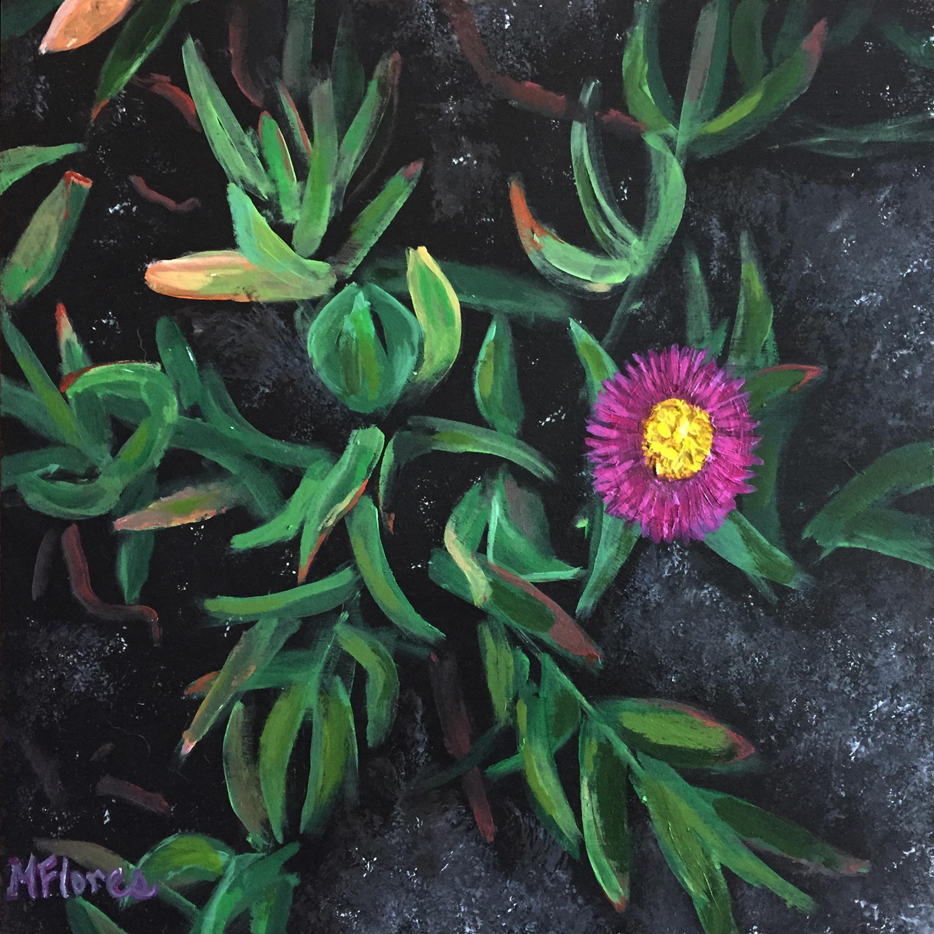 Ice Plant 2  10